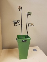 Air Plants with Art Stakes Desk Arrangement