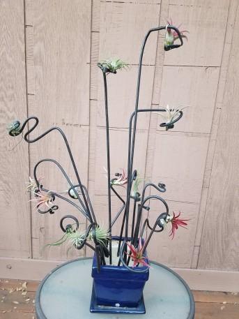 Busy Air Plants Pot