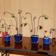 Row of Air Plant Art Stakes