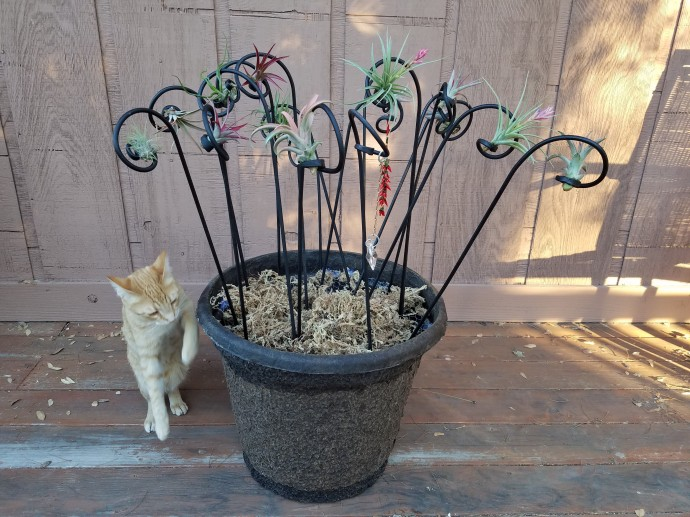 Pot of Deco Stakes with Air Plants