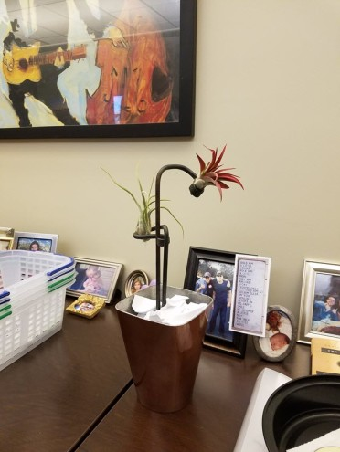 Two Air Plant Art Stakes for the Office